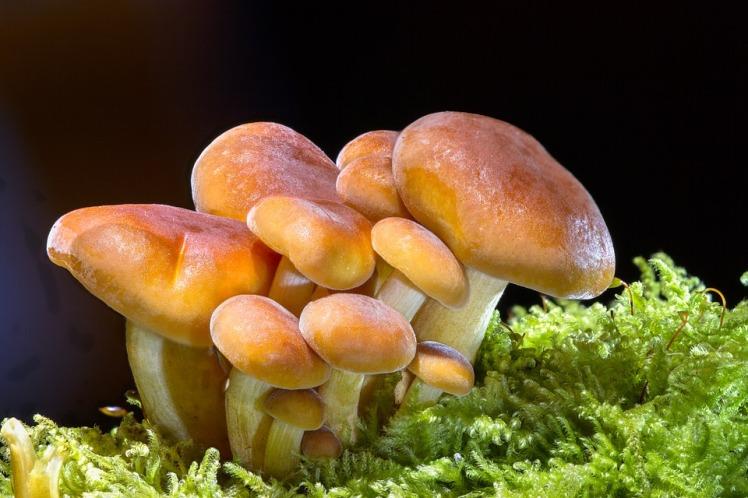 mushroom-2279558_960_720